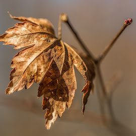 by Michael Provenzano - Nature Up Close Leaves & Grasses ( nature, leafs, nature up close, leaf, leaves,  )