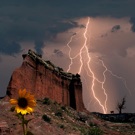 Texas Lightning by Jim Livingston - Landscapes Weather ( lightning, weather, cow, storm, landscape, sunset., flower )