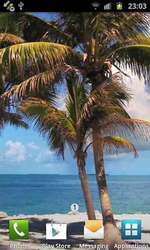 Beach Trees Live Wallpaper