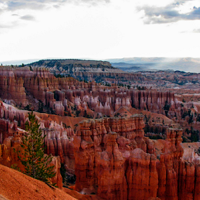 Breathtaking Views of Bryce Canyon, UT by Vonelle Swanson - Landscapes Mountains & Hills ( national park, utah, trees, hoodoos, landscape, rocks, bryce canyon )