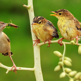 A Grasshopper Snack by Roy Husada - Animals Birds