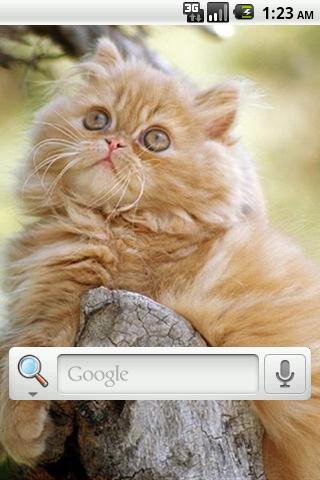 ペルシャ猫の壁紙ライブ