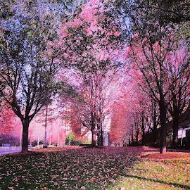 A sea of pink by Alejandra Tovar - City,  Street & Park  City Parks