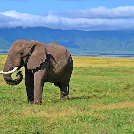 Breakfast In Paradise by Shashank Pattekar - Novices Only Wildlife ( ngorongoro crater, elephant, wildlife, africa, tanzania )