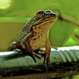 Morning Walt by Michael Crawley - Animals Amphibians