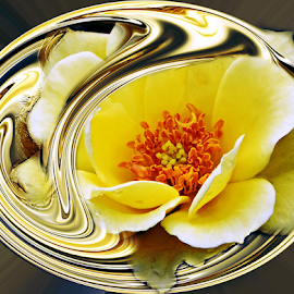 FAITH by Carmen Velcic - Digital Art Abstract ( abstract, roses, yellow, gold, flowers, digital )