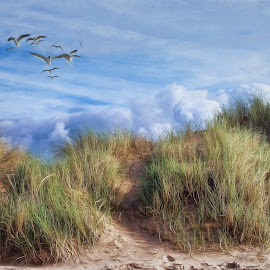 Sand dunes and sunny skies on a hot summer's day by Roy Branford - Landscapes Beaches ( clouds, sand, sky, summer, topazlabs )