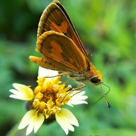 kupu-kupu by Saefull Regina - Instagram & Mobile Android