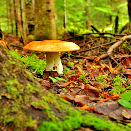 Autumn in the Forest by Gary Latone - Nature Up Close Mushrooms & Fungi