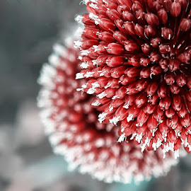 From above by Miss Panic - Nature Up Close Other plants ( nature, plants, nature up close, pink, flower )