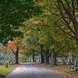by Dave Meng - City,  Street & Park  Cemeteries
