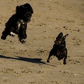Look I can Fly! by Laura Chiara - Animals - Dogs Running (  )
