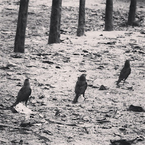 by Shiful Riyadh - Instagram & Mobile Other ( bird, abstract, instagram, tree, black & white, pixoto, crow, line, repetition,  )