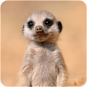 Cute Baby Animals Pictures icon