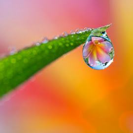 The one by Citra Hernadi - Nature Up Close Natural Waterdrops