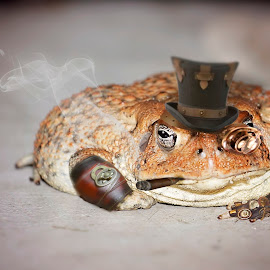 Steampunk Toad by Delisa Keller - Animals Amphibians ( #fat #toad #steampunk #funny #photoshop )