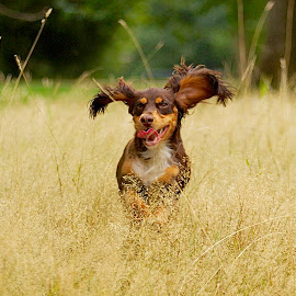 by James Blyth Currie - Animals - Dogs Puppies