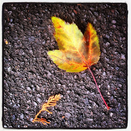 is here. by Erik Bishoff - Instagram & Mobile iPhone ( Fall, toosoon )