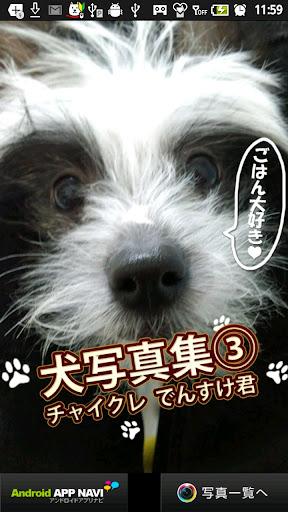 犬写真集③レオ君との出会い(!)チャイクレでんすけ君