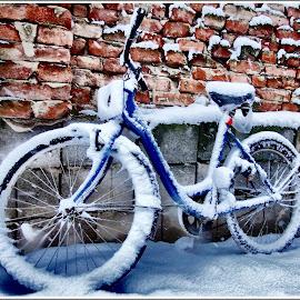 winter  bicycle by Zlatko Sarcevic - Transportation Bicycles ( winter, bike, snow,  )