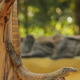 Nyambek by Ibnu Sina - Animals Reptiles