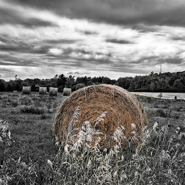 In Motion by Lino Chetcuti - Landscapes Prairies, Meadows & Fields ( selective color, pwc )