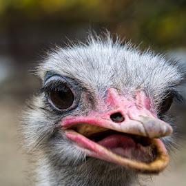 poseur by Hadis Kulovac - Animals Birds