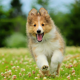 by Jane Bjerkli - Animals - Dogs Running (  )
