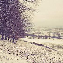Vinteage mood  by Silviu Suciu - Landscapes Mountains & Hills ( nature, snow, lanscape, moody, forest )