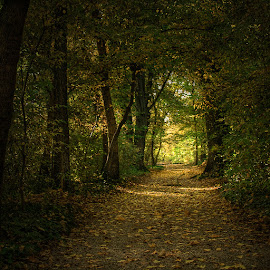 by Zsolt Zsigmond - Landscapes Forests ( autumn, green, fall, path, trees, forest, square, leaves )