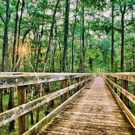 Fair Bluff River Walk by Jody Johnson - Landscapes Forests ( photorad, sunrise, woods, boardwalk, river )