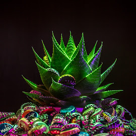 plant on a mountain of crowns  by Dimitri Haeck - Artistic Objects Other Objects ( kleur, berg, plant, mountain, groen, purple, crowns, color, green, paars, kroonkurken )