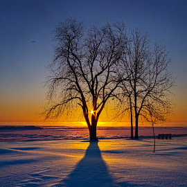 Moments of Clarity by Phil Koch - Landscapes Prairies, Meadows & Fields ( vertical, photograph, fine art, travel, yellow, leaves, love, sky, nature, tree, autumn, bluesky, light, flower, orange, twilight, agriculture, horizon, portrait, dawn, backlight, serene, outdoors, trees, floral, natural light, wisconsin, ray, landscape, phil koch, sun, photography, path, horizons, clouds, office, park, green, scenic, morning, shadows, wild flowers, field, red, color, blue, sunset, peace, fall, meadow, beam, earth, sunrise, landscapes, hike, mist,  )