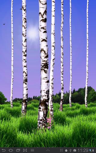 Birch Wood Free