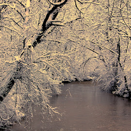 Snowy River by Danny Stankiewicz - Nature Up Close Trees & Bushes ( water, snow, trees, landscape, river )