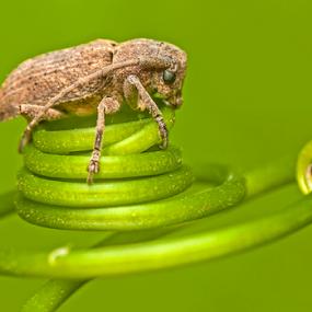 Ring of life by Pak Lang - Animals Insects & Spiders ( macro, pulau pinang, nature, micro, penang, malaysia, insect,  )