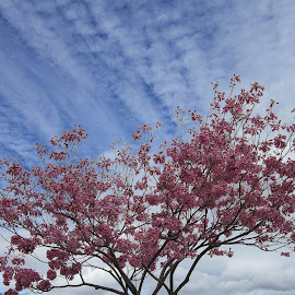 Pink flowers and clouds by Trudi Crookshanks - Landscapes Weather ( clouds, white, trees, pink, flowers )