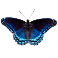 Game Butterfly apk for kindle fire