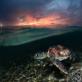 Sunset swim by Andrey Narchuk - Animals Reptiles ( clouds, underwater, green, sea, landscape, turtle, nature, color, sunset, wave, sundown, split, philippines, sea creatures, underwater life, ocean life )