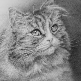 Sheila by Jennifer Woodward - Drawing All Drawing ( animals, cat, pets, portrait )