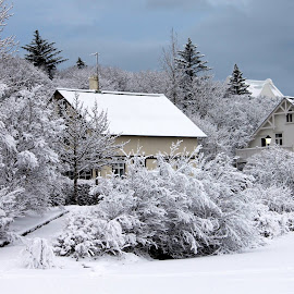 Winter by Anna Kornelíusdóttir - Landscapes Weather ( snow )