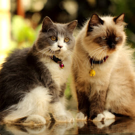 by Hari Kristianto - Animals - Cats Portraits