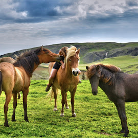 Summer happy time by Oddsteinn Björnsson - Animals Horses ( nikon,  )