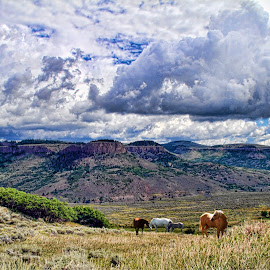 Colorado Horses  by Len Lambert - Landscapes Mountains & Hills ( clouds, hills, mountains, horses, fields )