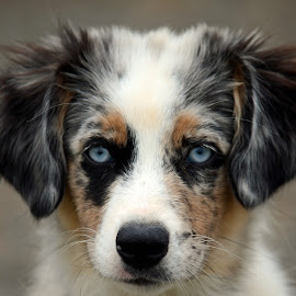 by Jonathan Route - Animals - Dogs Puppies