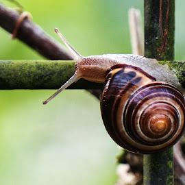 Snail by Sunny Zheng - Animals Other ( fence, vine, snail, fleetwood gardens, garden )