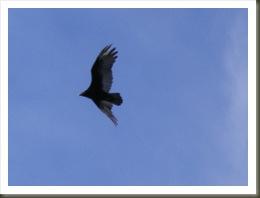 Strange bird_edited