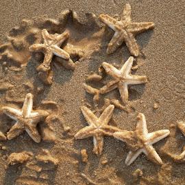 by Tanvir Iqbal - Animals Sea Creatures