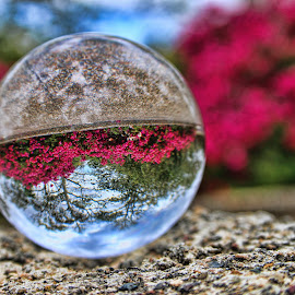Crystal Bougainvillea by Carole Pallier Cazzazsnapz - Artistic Objects Other Objects ( bougainvilleas, ball, sky, trees, reflections, crystal, flowers, rocks )