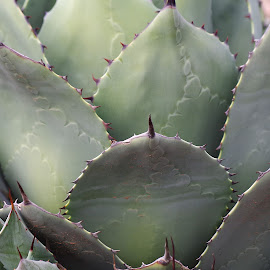 by Ken Mickel - Nature Up Close Other plants